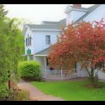 Manor House Tree